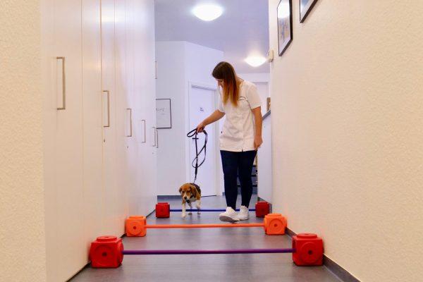 Tierarztpraxis-Dr-silke-scholkmann